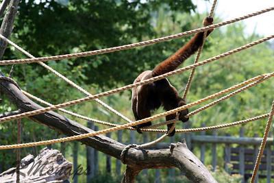 zoo_20070616_0360