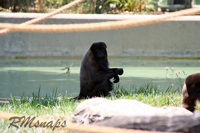 zoo_20070616_0361