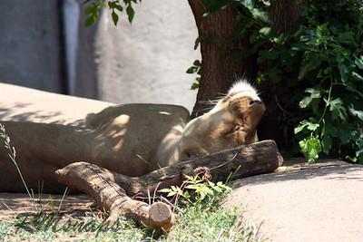 zoo_20070616_0354
