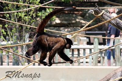 zoo_20070616_0369