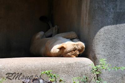 zoo_20070616_0355