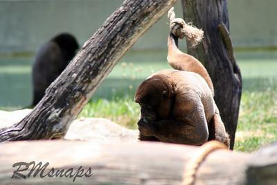 zoo_20070616_0363