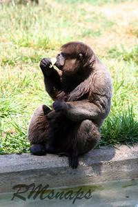 zoo_20070616_0372
