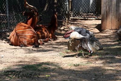 zoo_20070616_0350