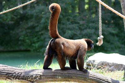 zoo_20070616_0359
