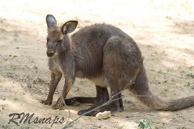 zoo_20070616_0387