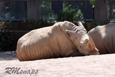zoo_20070616_0345
