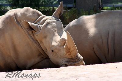 zoo_20070616_0346