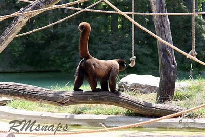 zoo_20070616_0358