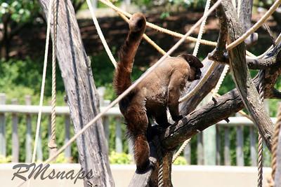 zoo_20070616_0368