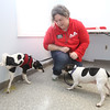 Lowell Humane Society communications & fundraising manager Crystal Arnott of Lowell, with rat terriers Maxwell, 7, left, and Maxine, 8, who've been together Maxwell's whole life. They hope the dogs will be adopted together and are holding a wedding for them. Arnott thought Maxwell was peeing from excitement of smelling other dogs. (SUN/Julia Malakie)
