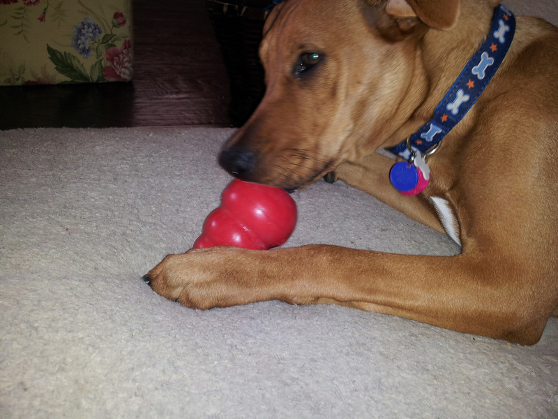 I really love my Kong