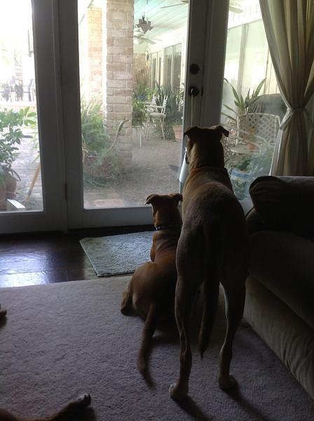 Oscar & Lucy