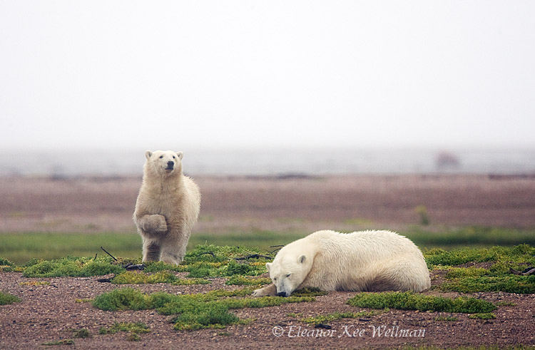 Sow & Cub in the Mist