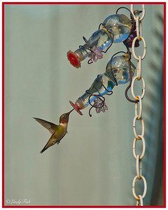 Love these beautiful Hummingbirds