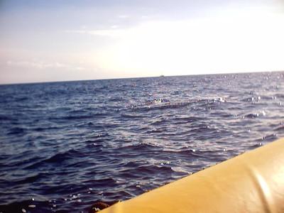 MAUI HI- 2005 Whale Watching