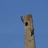 Red-Bellied Woodpecker pair nesting near stop 2 on Black Point