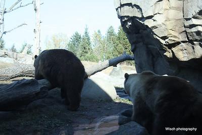 MN Zoo Oct 2012