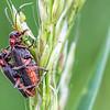 Insectes en train de...
