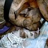 Cocoa giving birth.