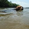 Maeby went for a swim - voluntarily! Tellico Lake, 07/13/15