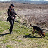 Maeby at Seven Islands. She caught a sent and started tracking, which makes her a handful to control. Kim lent me her leash, which I attached to her collar as a failsafe in case she slipped her headcollar. 02/17/13