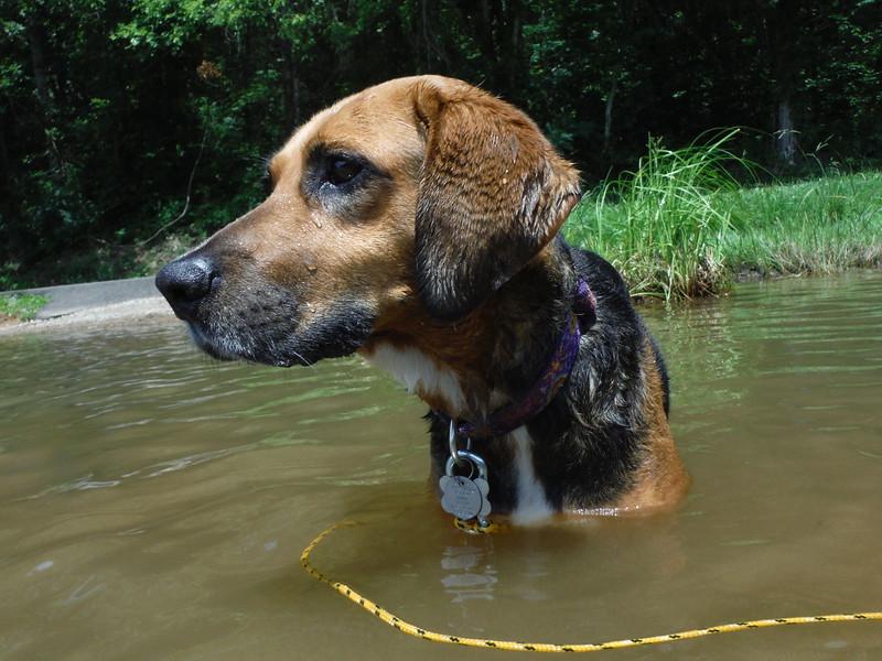 I are serious dog. This is serious lake. Tellico Lake, 07/13/15