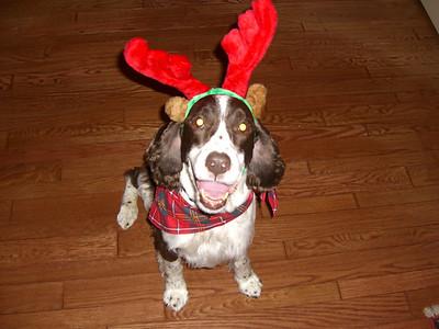 Maeve Dog 1993-2007