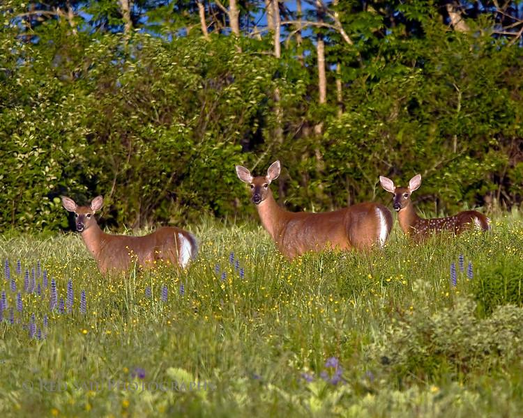 Early morning shot taken at Fields Pond Audubon facility near Bangor.