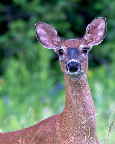 This doe walked right out in front of me, stared for a second, click and she was gone.