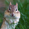 Do chipmonks smile???