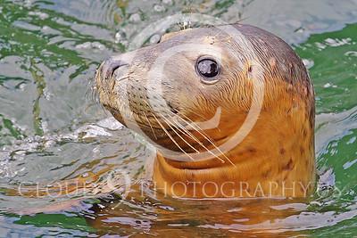 AN - Seal 00026 by Tony Fairey