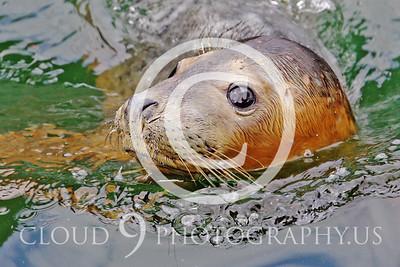AN - Seal 00010 by Tony Fairey