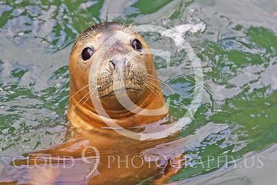 AN - Seal 00003 by Tony Fairey