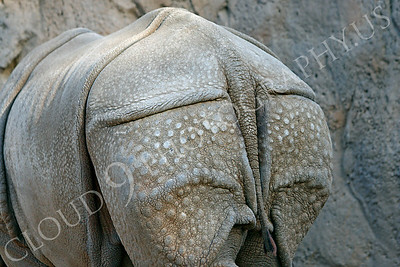 Great Indian One-horned Rhinoceros 00050 by Peter J Mancus