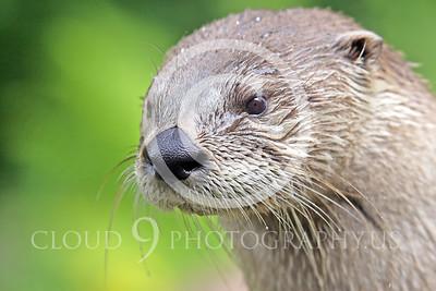 AN - Otter 00047 by Tony Fairey
