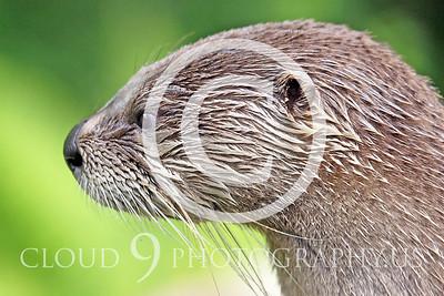 AN - Otter 00015 by Tony Fairey