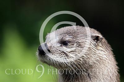 AN - Otter 00018 by Tony Fairey
