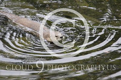 AN - Otter 00016 by Tony Fairey