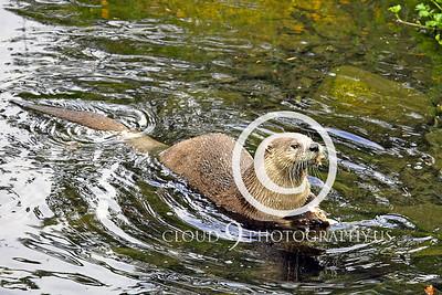 AN - Otter 00007 by Tony Fairey