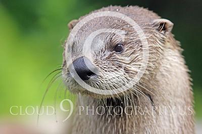 AN - Otter 00030 by Tony Fairey