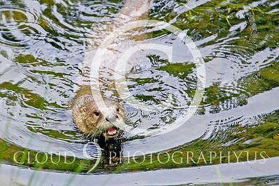 AN - Otter 00017 by Tony Fairey