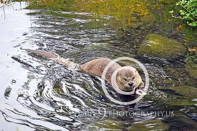 AN - Otter 00010 by Tony Fairey