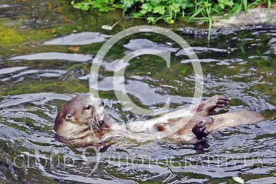 AN - Otter 00022 by Tony Fairey