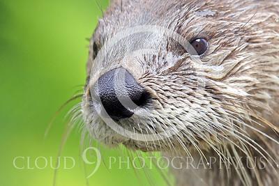 AN - Otter 00014 by Tony Fairey