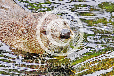 AN - Otter 00038 by Tony Fairey