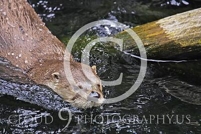 AN - Otter 00019 by Tony Fairey