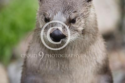 AN - Otter 00006 by Tony Fairey