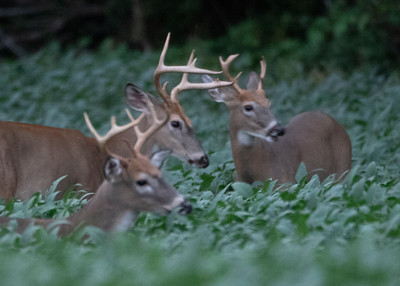 Bucks Begin to Battle
