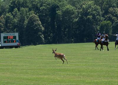 Buck bolts onto polo field